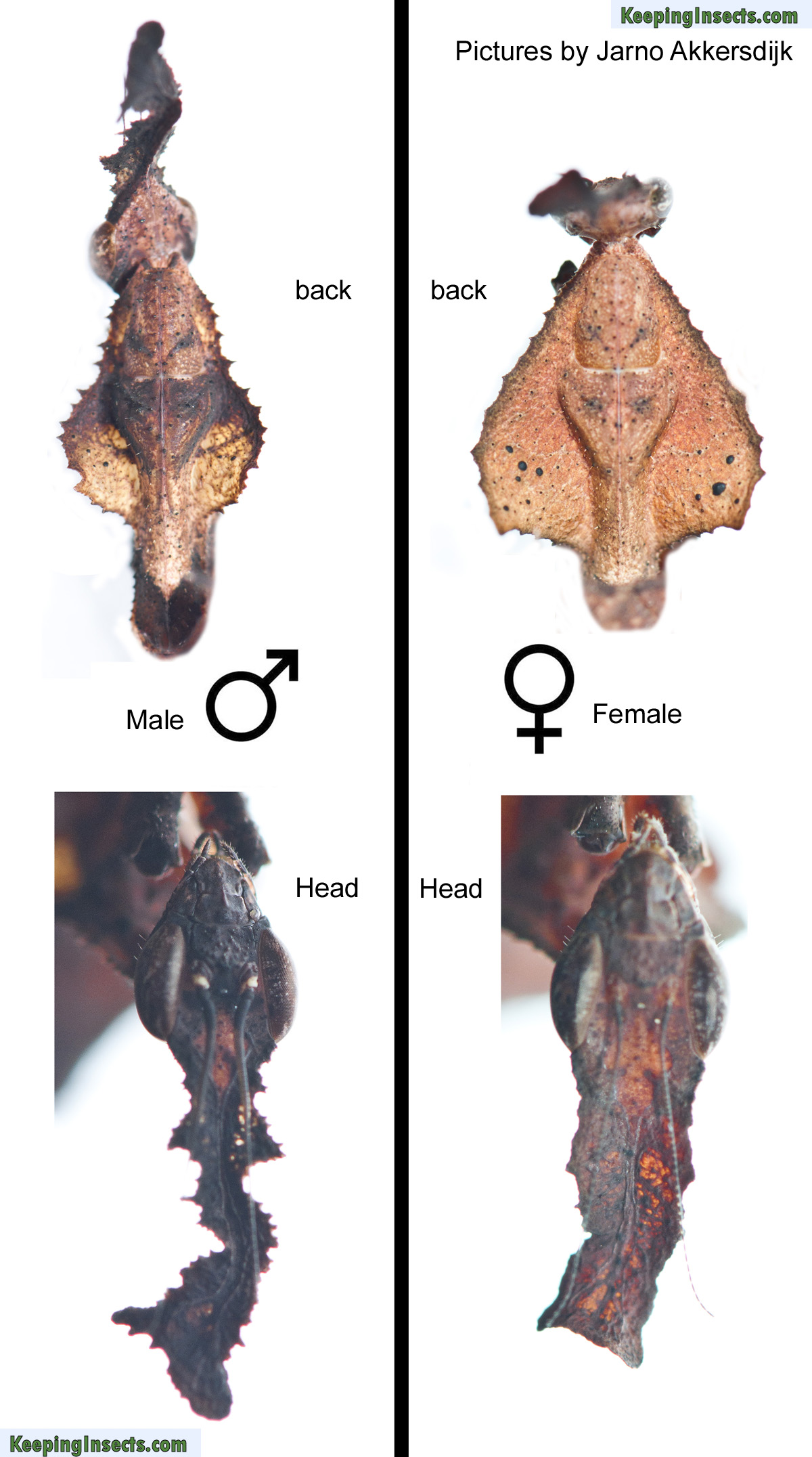 Sex after male to female surgery-9235